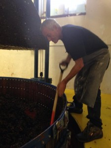 Grapes in the pressoir